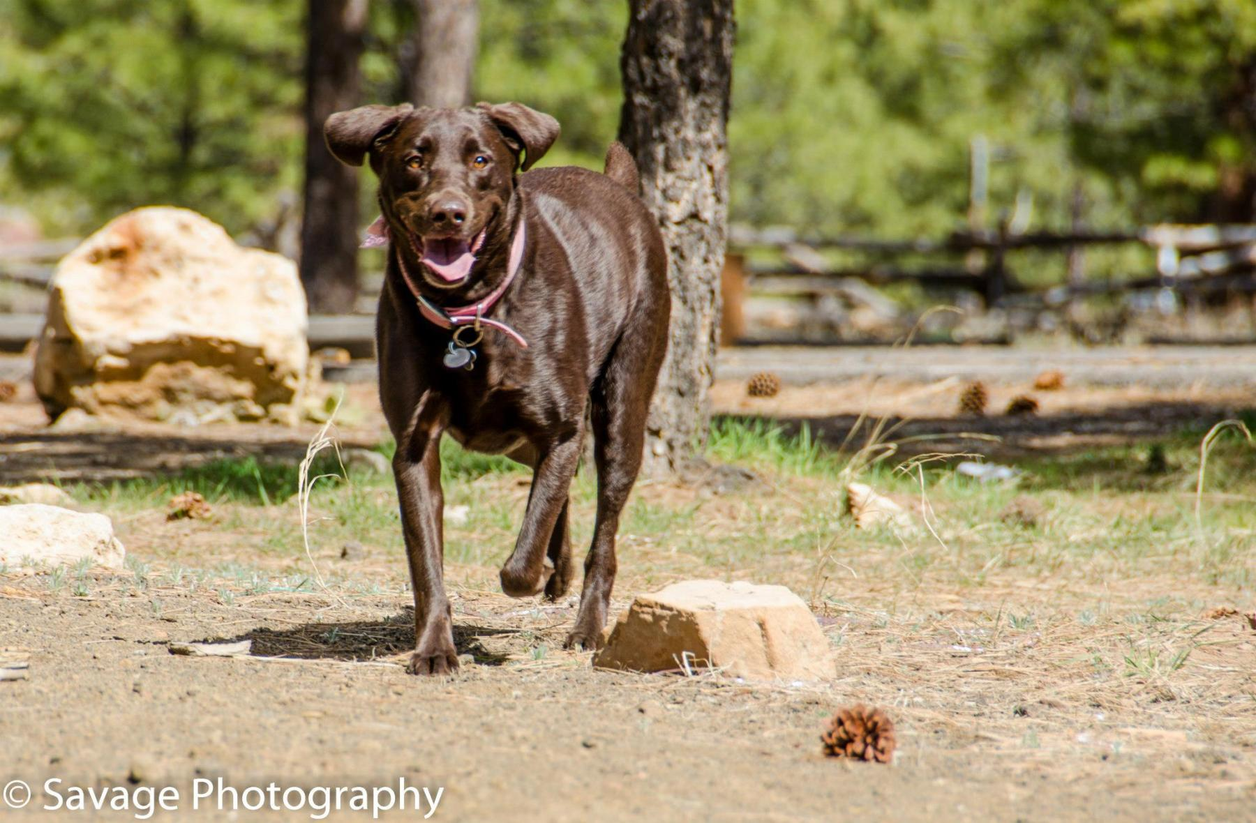 Pet Photography in Flagstaff